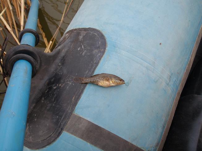 рыбалка полтавский район